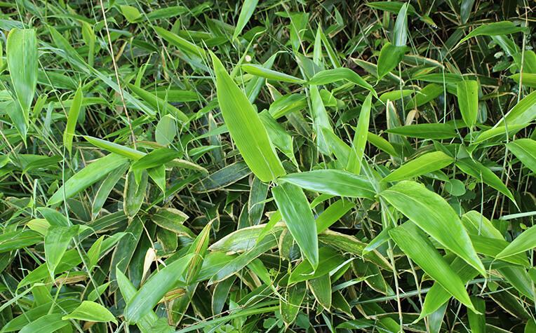 5月下旬の葉は色鮮やかな緑色