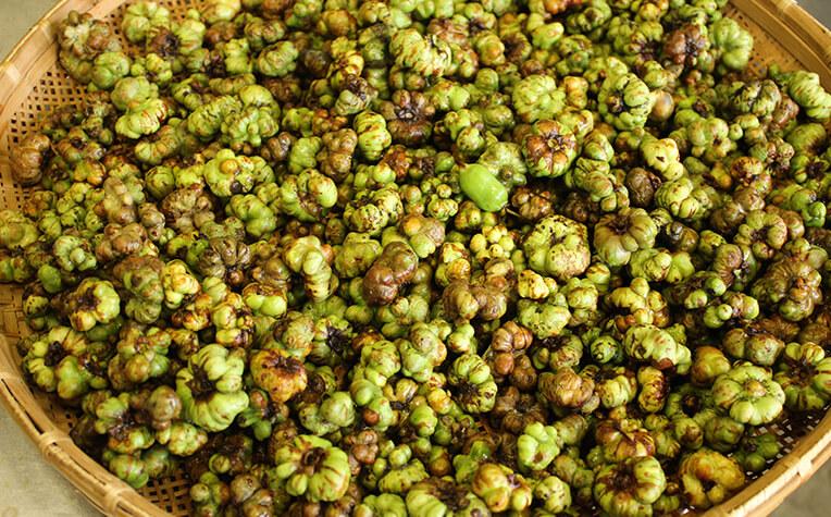 阿蘇薬草園では虫コブができた果実を使用する
