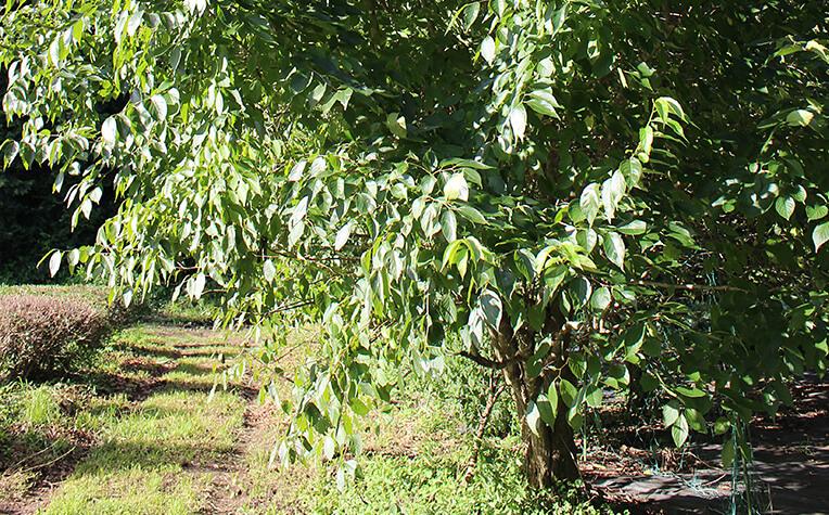 8月中旬のとちゅうの木